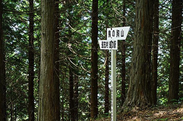 道志村道の駅方面に下山