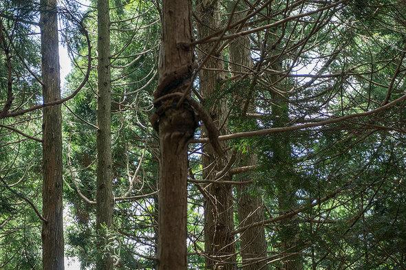 木に蛇のようなものがいる!