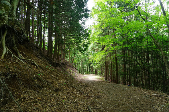 しばらく広い林道歩き!