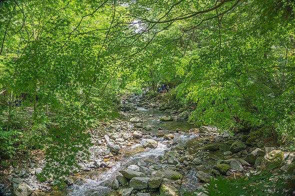 道志の森オートキャンプ場内を流れる三ヶ瀬川