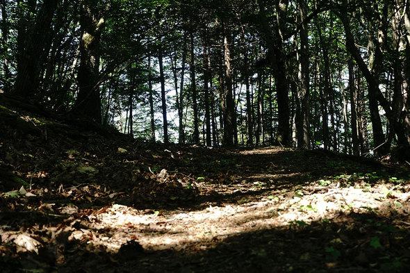 横手山峠に向かう山道