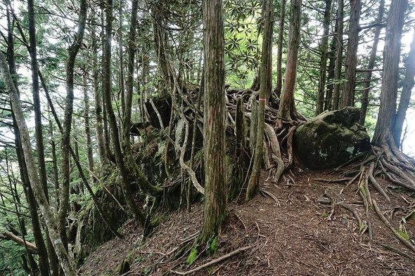 鶏冠神社方面の山道は、岩や根っこの上歩く。