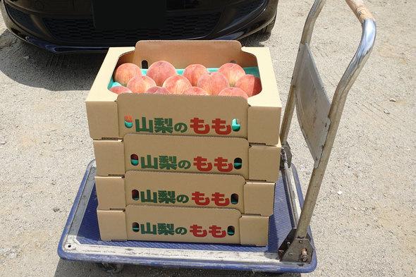 JAフルーツ山梨大藤共選所で購入した桃!