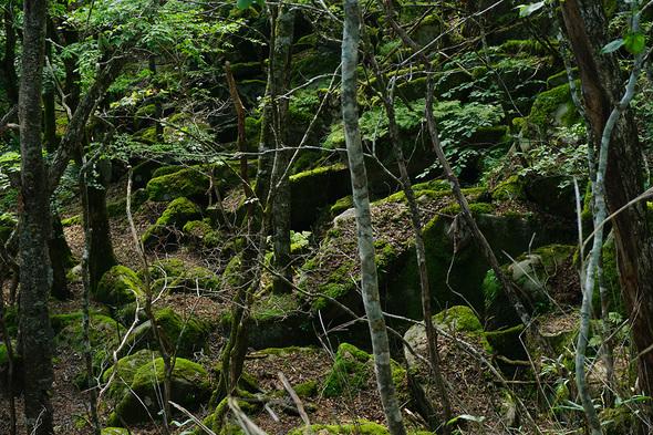 三窪高原ハイキングコースから望む苔むした谷間