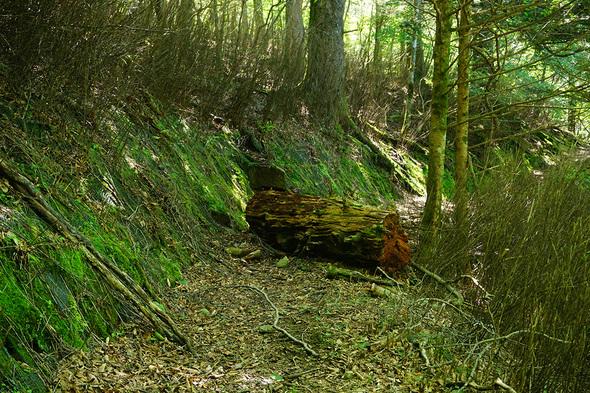 通路を塞ぐ大きな倒木