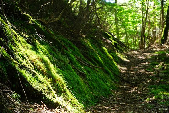 斜面に苔がいっぱい