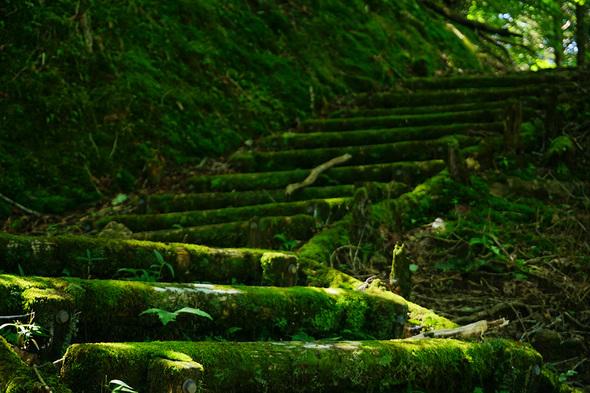 苔むした木道階段