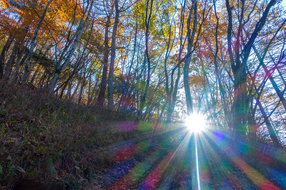森に射し込む朝陽
