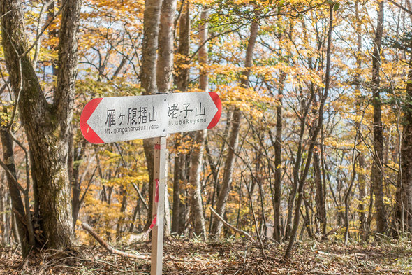 姥子山への道標