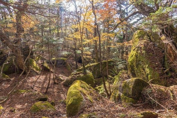 岩の多いエリア