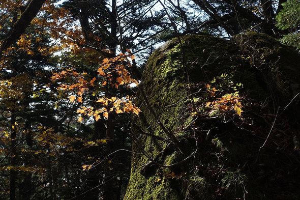岩から紅葉