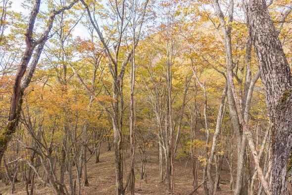 林道から姥子山を見上げる