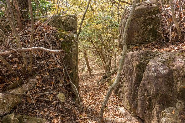 姥子山の山道は少々険しい