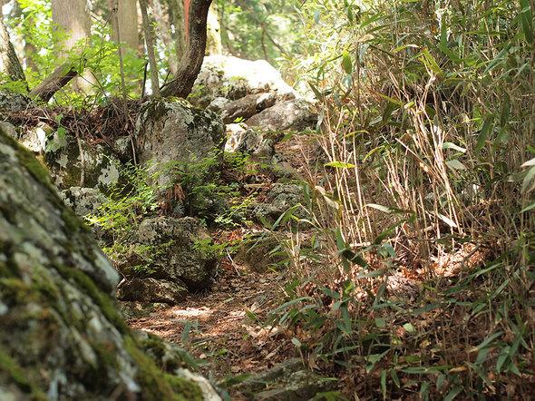 つづら岩から富士見台方面に向かう馬頭刈尾根