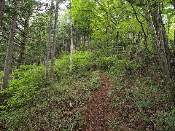 大岳山直登コースの山道