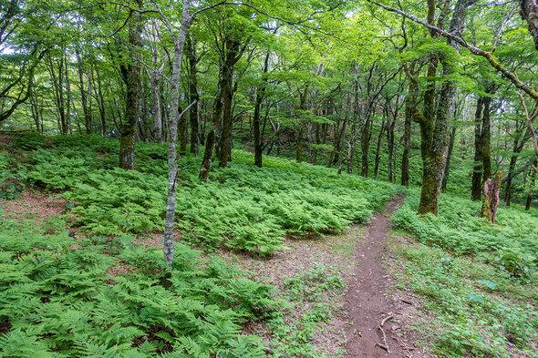 やまなしの森林スポット百選 広葉樹林エリア