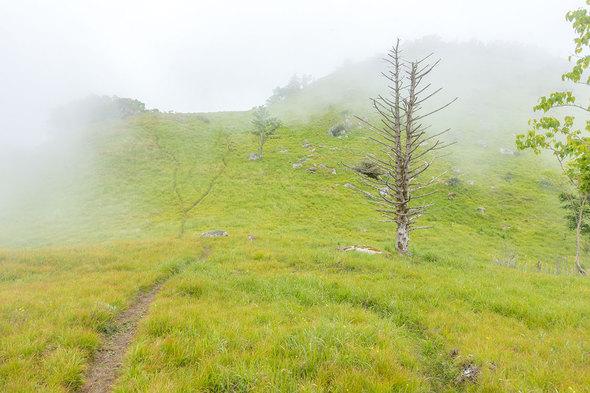 夏の白谷ノ丸の草原風景
