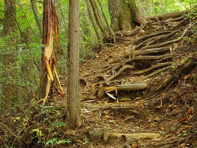 熊の爪痕が残る石山の路