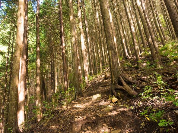 三頭山「探鳥の路」の急斜面