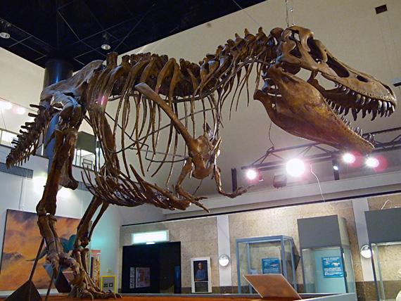 大きな恐竜