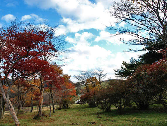 霧降高原大笹牧場の紅葉