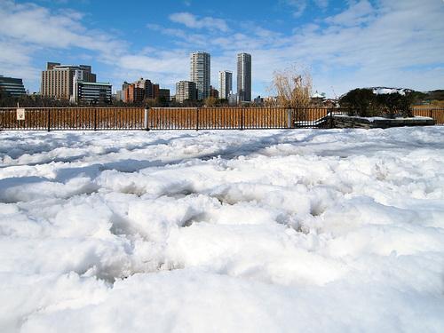 雪につつまれた不忍池