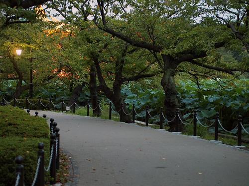 不忍池の遊歩道