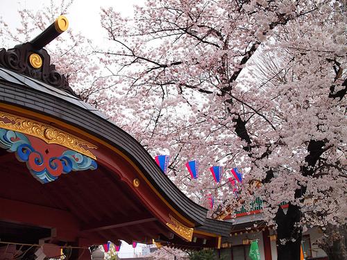 神田明神と桜