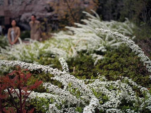屋上庭園のお花