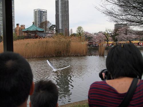 ゆりかもめを撮影する外国人観光客