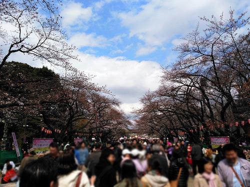 2016年3月27日の上野公園2