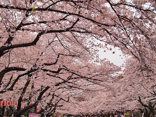 2016年4月2日の上野公園1