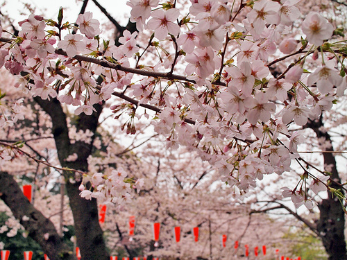 2016年4月2日の上野公園3