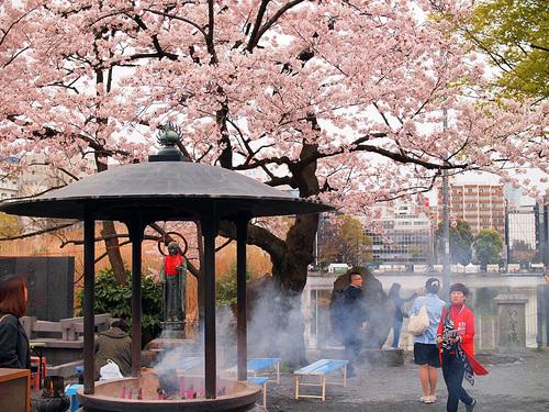 2016年4月2日の上野公園4