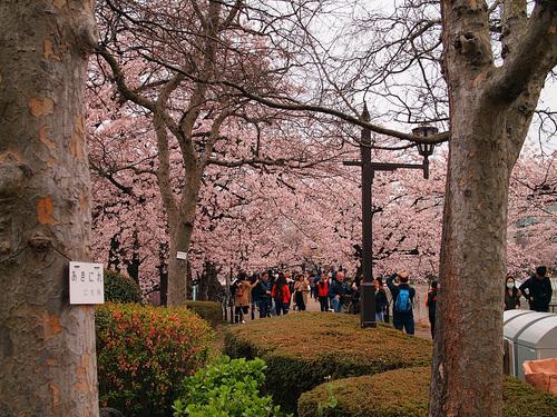 2016年4月2日の上野公園6