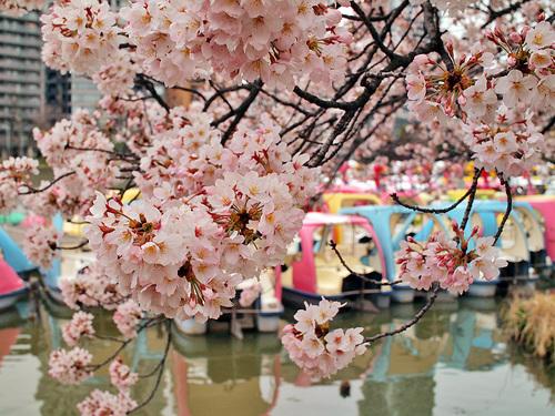 2016年4月2日の上野公園7
