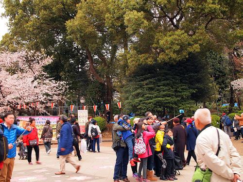 2016年4月2日の上野公園10