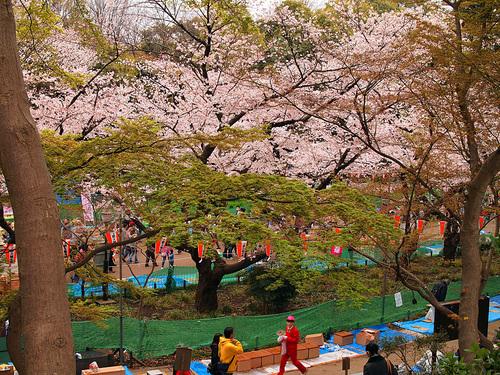 2016年4月2日の上野公園11