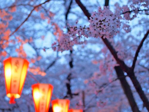 上野公園桜満開3