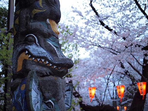 上野公園桜満開4