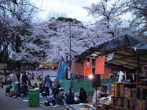 上野公園桜満開5