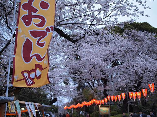 上野公園桜満開6