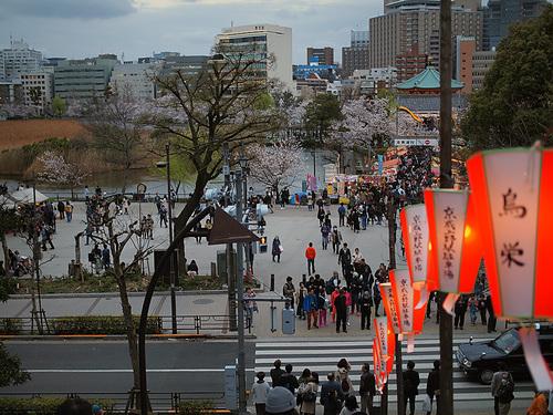上野公園桜満開7