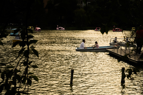 9月3日、上野公園ボート池