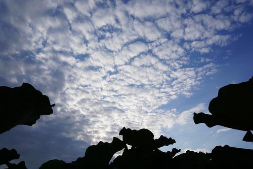 不忍池の蓮と雲JPG