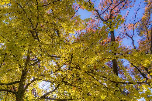 上野公園の紅葉_2