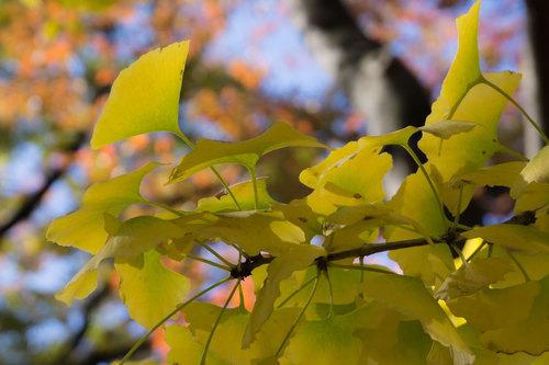 上野公園の紅葉_4