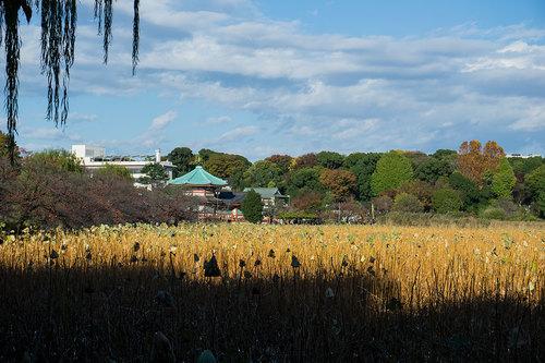 上野公園不忍池_1
