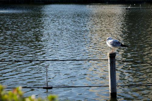 上野公園ボート池