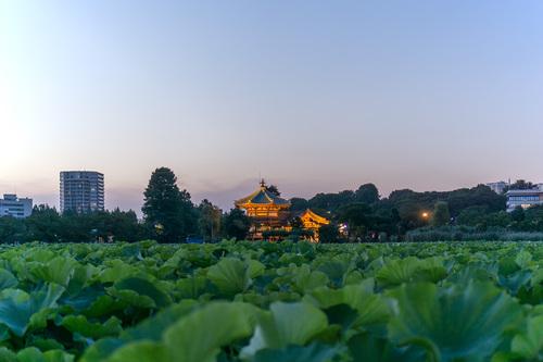 2018年7月1日夜の上野公園1